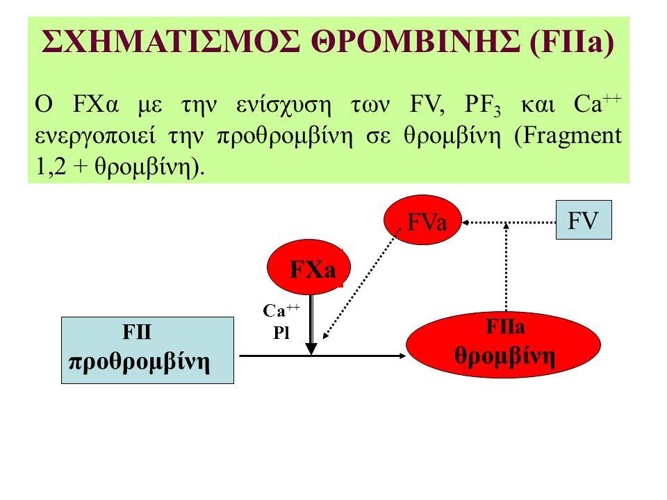 ΣΧΗΜΑΤΙΣΜΟΣ ΘΡΟΜΒΙΝΗΣ (FIIa) Ο FΧα με την ενίσχυση των FV, PF 3 και Ca ++ ενεργοποιεί την προθρομβίνη σε θρομβίνη (Fragment 1,2 + θρομβίνη).