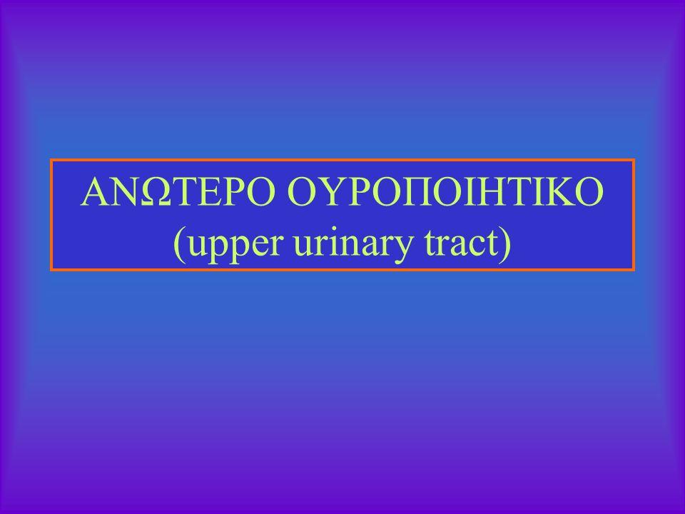 ΑΝΩΤΕΡΟ ΟΥΡΟΠΟΙΗΤΙΚΟ (upper urinary tract)