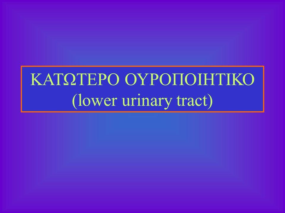 ΚΑΤΩΤΕΡΟ ΟΥΡΟΠΟΙΗΤΙΚΟ (lower urinary tract)