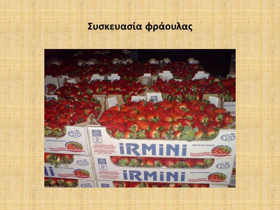 Συσκευασία φράουλας