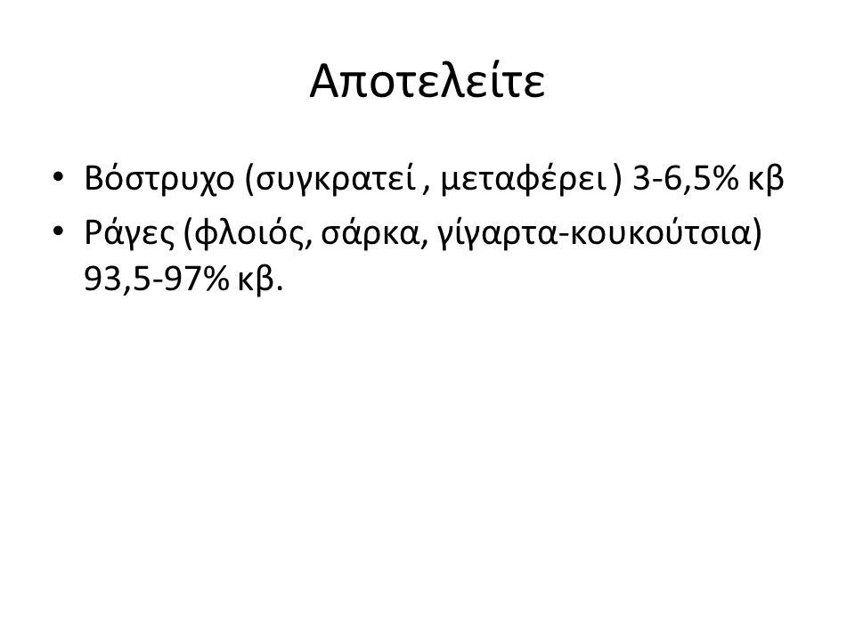 Αποτελείτε Βόστρυχο (συγκρατεί, μεταφέρει ) 3-6,5% κβ Ράγες (φλοιός, σάρκα, γίγαρτα-κουκούτσια) 93,5-97% κβ.