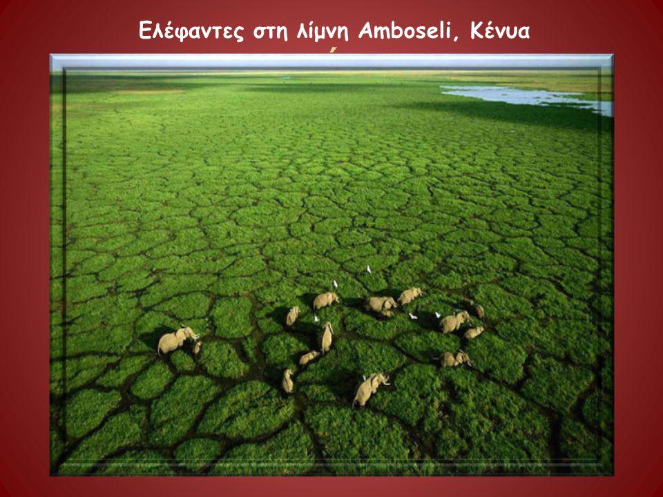 έ Ελέφαντες στη λίμνη Amboseli, Κένυα