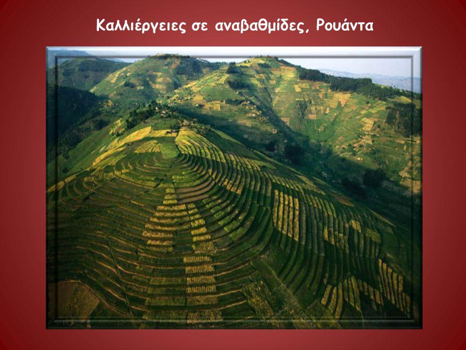 Καλλιέργειες σε αναβαθμίδες, Ρουάντα