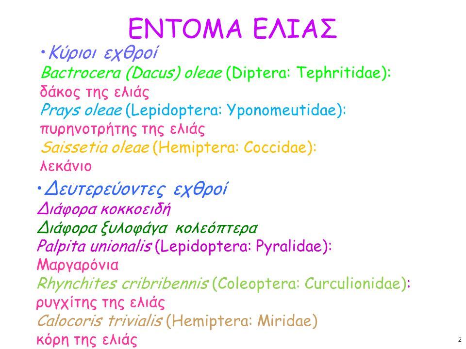 Bactrocera oleae (Diptera: Tephritidae) δάκος της ελιάς Ελιά, αγριελιά (μονοφάγο) Τέλειο: 5 mm, θώρακας με 3 κατά μήκος καστανές γραμμές, διαφανείς πτέρυγες με ακρόστιγμα (πτερόστιγμα) Ωό: λευκό, μακρόστενο Προνύμφη: υπόλευκη, 7-8 mm Πούπα: ελλειψοειδής, καστανή 3