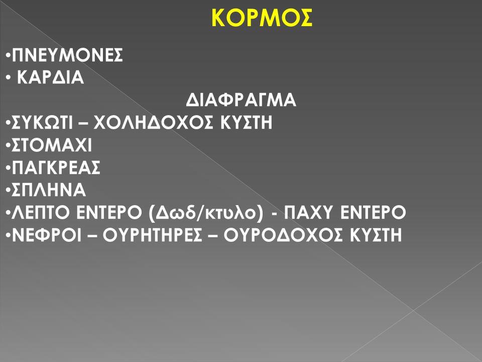 ΚΟΡΜΟΣ ΠΝΕΥΜΟΝΕΣ ΚΑΡΔΙΑ ΔΙΑΦΡΑΓΜΑ ΣΥΚΩΤΙ – ΧΟΛΗΔΟΧΟΣ ΚΥΣΤΗ ΣΤΟΜΑΧΙ ΠΑΓΚΡΕΑΣ ΣΠΛΗΝΑ ΛΕΠΤΟ ΕΝΤΕΡΟ (Δωδ/κτυλο) - ΠΑΧΥ ΕΝΤΕΡΟ ΝΕΦΡΟΙ – ΟΥΡΗΤΗΡΕΣ – ΟΥΡΟΔΟΧΟΣ ΚΥΣΤΗ