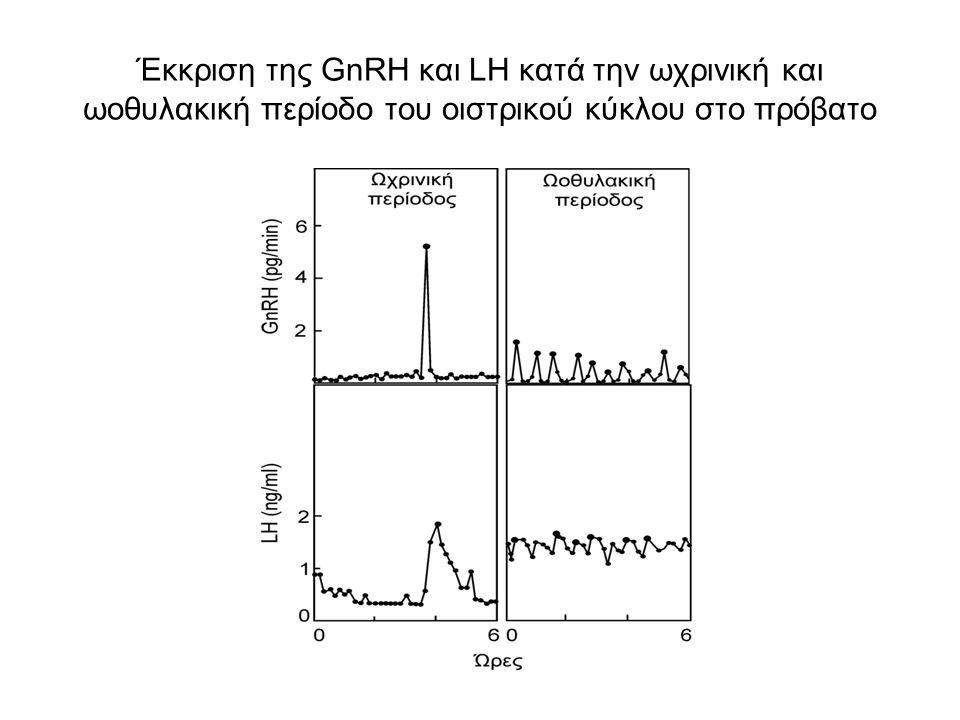 Έκκριση της GnRH και LH κατά την ωχρινική και ωοθυλακική περίοδο του οιστρικού κύκλου στο πρόβατο