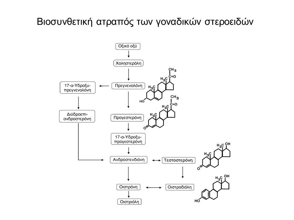 Βιοσυνθετική ατραπός των γοναδικών στεροειδών