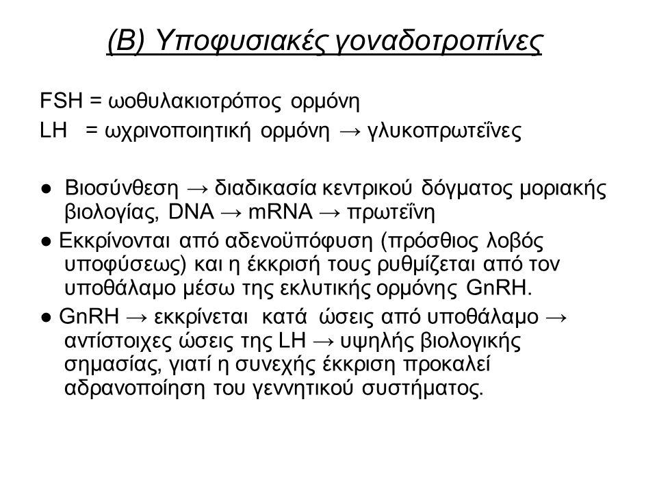 (Β) Υποφυσιακές γοναδοτροπίνες FSH = ωοθυλακιοτρόπος ορμόνη LH = ωχρινοποιητική ορμόνη → γλυκοπρωτεΐνες ● Βιοσύνθεση → διαδικασία κεντρικού δόγματος μοριακής βιολογίας, DNA → mRNA → πρωτεΐνη ● Εκκρίνονται από αδενοϋπόφυση (πρόσθιος λοβός υποφύσεως) και η έκκρισή τους ρυθμίζεται από τον υποθάλαμο μέσω της εκλυτικής ορμόνης GnRH.