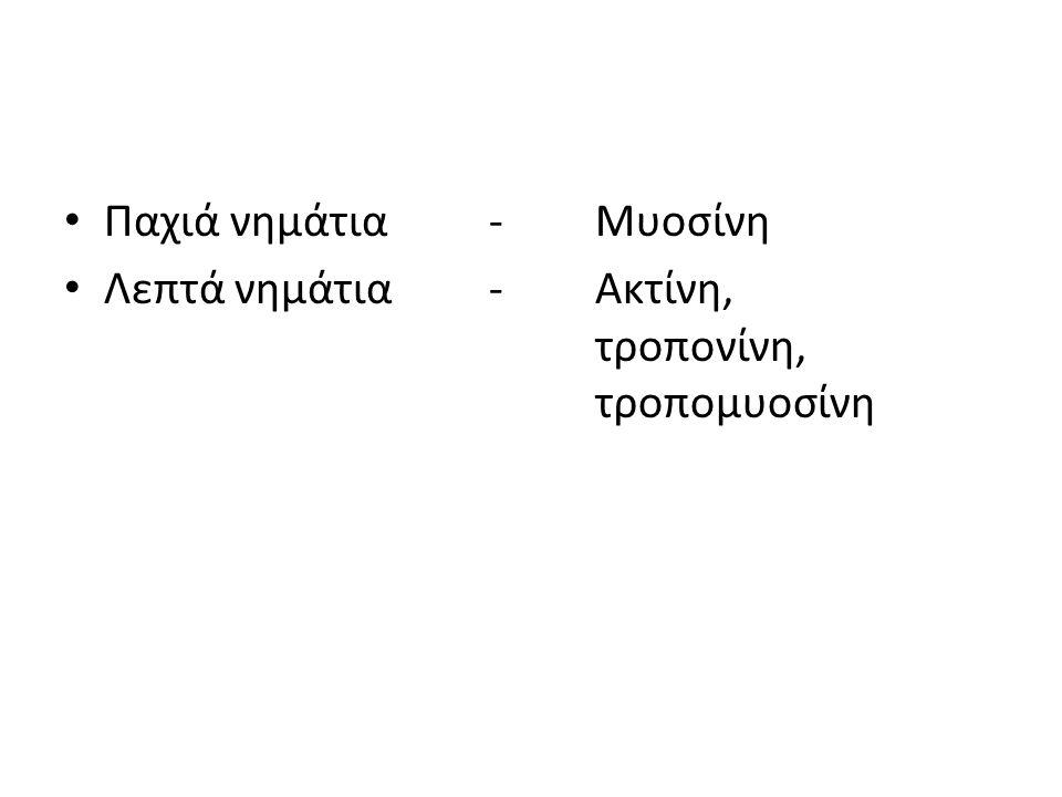 Παχιά νημάτια-Μυοσίνη Λεπτά νημάτια-Ακτίνη, τροπονίνη, τροπομυοσίνη