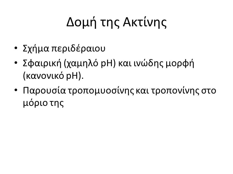 Δομή της Ακτίνης Σχήμα περιδέραιου Σφαιρική (χαμηλό pH) και ινώδης μορφή (κανονικό pH).