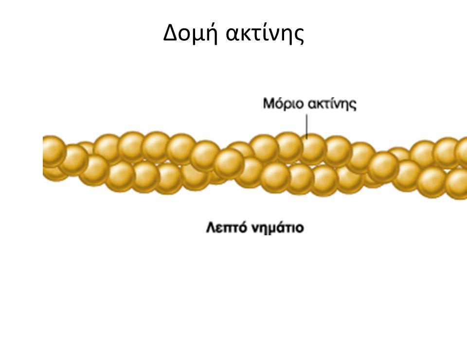 Δομή ακτίνης