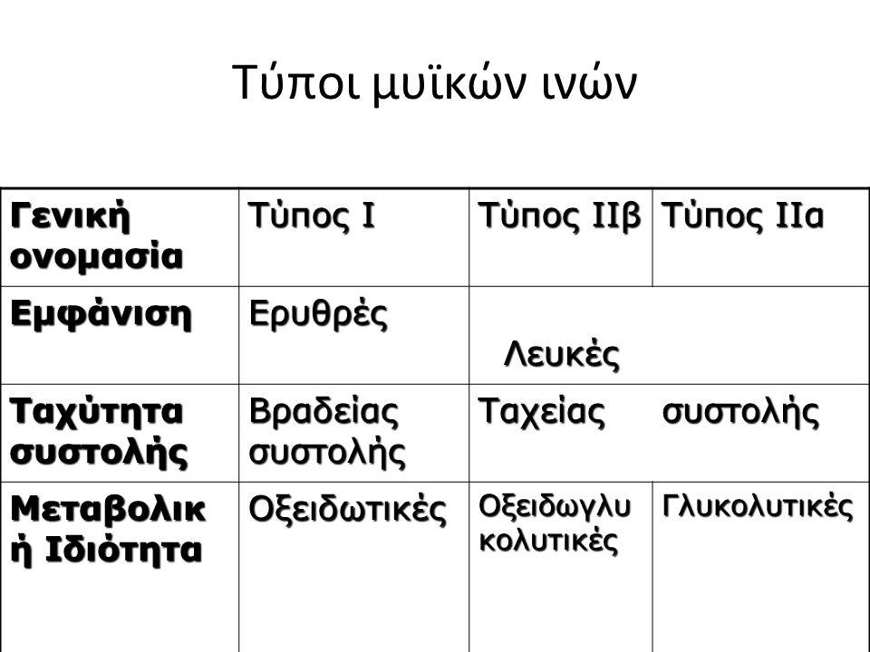 Τύποι μυϊκών ινών Γενική ονομασία Tύπος Ι Τύπος ΙΙβ Τύπος ΙΙα ΕμφάνισηΕρυθρές Λευκές Λευκές Ταχύτητα συστολής Βραδείας συστολής Ταχείαςσυστολής Μεταβολικ ή Ιδιότητα Οξειδωτικές Οξειδωγλυ κολυτικές Γλυκολυτικές