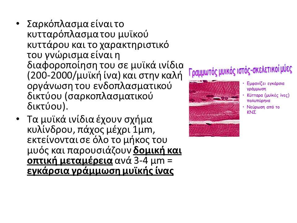 Σαρκόπλασμα είναι το κυτταρόπλασμα του μυϊκού κυττάρου και το χαρακτηριστικό του γνώρισμα είναι η διαφοροποίηση του σε μυϊκά ινίδια (200-2000/μυϊκή ίνα) και στην καλή οργάνωση του ενδοπλασματικού δικτύου (σαρκοπλασματικού δικτύου).