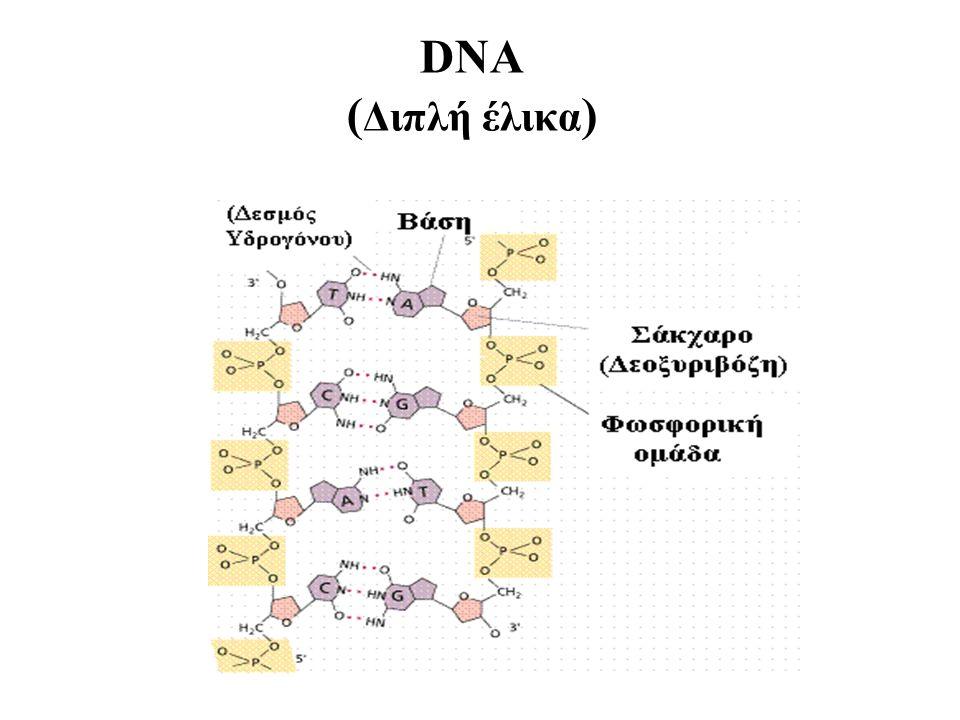 DNA ( Διπλή έλικα )