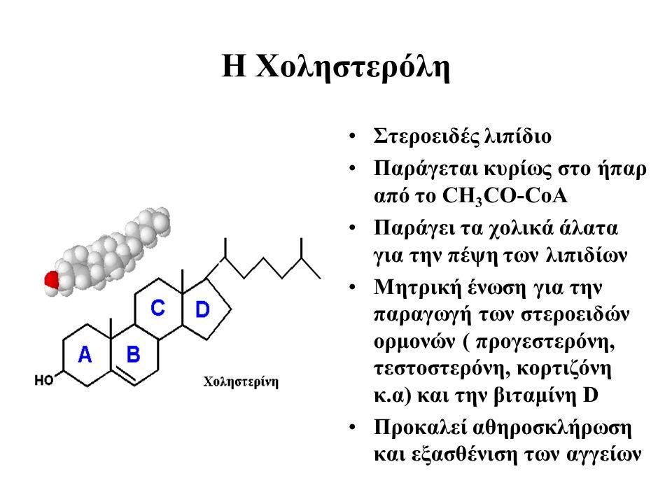 H Xοληστερόλη Στεροειδές λιπίδιο Παράγεται κυρίως στο ήπαρ από το CH 3 CO-CoA Παράγει τα χολικά άλατα για την πέψη των λιπιδίων Μητρική ένωση για την παραγωγή των στεροειδών ορμονών ( προγεστερόνη, τεστοστερόνη, κορτιζόνη κ.α) και την βιταμίνη D Προκαλεί αθηροσκλήρωση και εξασθένιση των αγγείων