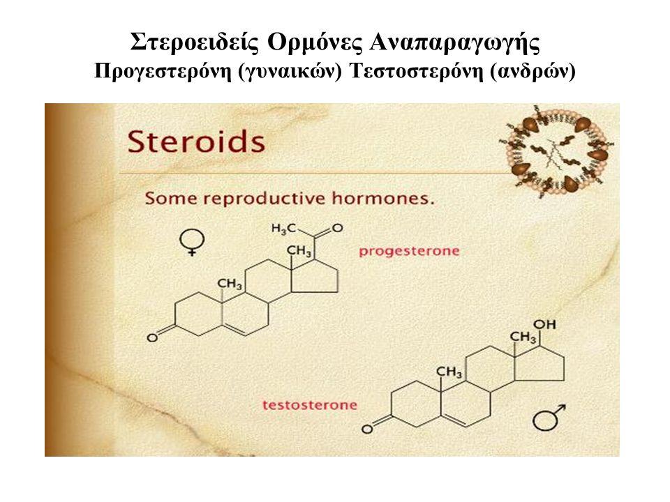 Στεροειδείς Ορμόνες Αναπαραγωγής Προγεστερόνη (γυναικών) Τεστοστερόνη (ανδρών)