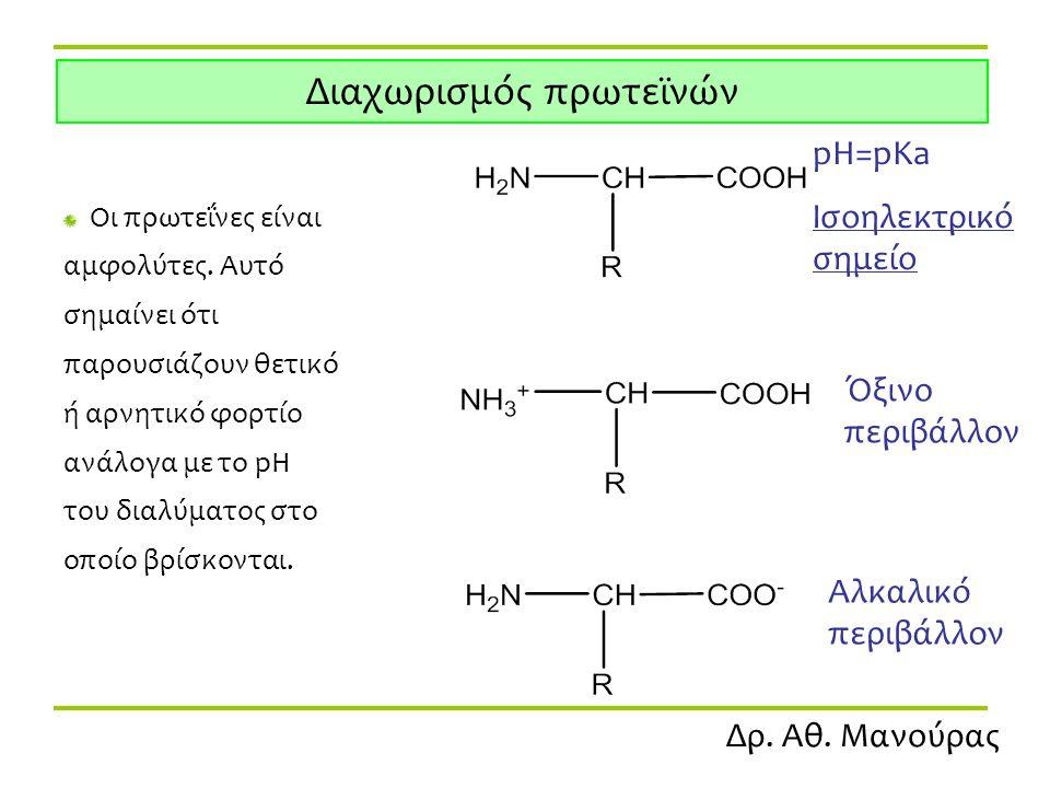 Δρ. Αθ. Μανούρας Διαχωρισμός πρωτεϊνών Οι πρωτεΐνες είναι αμφολύτες. Αυτό σημαίνει ότι παρουσιάζουν θετικό ή αρνητικό φορτίο ανάλογα με το pH του διαλ