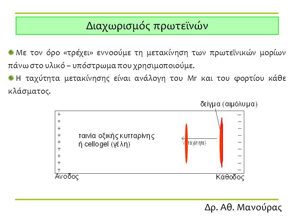 Δρ. Αθ. Μανούρας Διαχωρισμός πρωτεϊνών Με τον όρο «τρέχει» εννοούμε τη μετακίνηση των πρωτεϊνικών μορίων πάνω στο υλικό – υπόστρωμα που χρησιμοποιούμε
