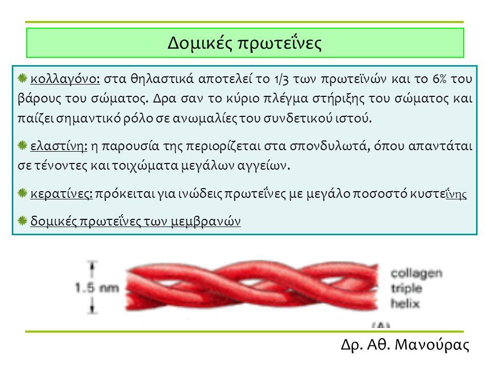 Δρ. Αθ. Μανούρας Δομικές πρωτεΐνες κολλαγόνο: στα θηλαστικά αποτελεί το 1/3 των πρωτεϊνών και το 6% του βάρους του σώματος. Δρα σαν το κύριο πλέγμα στ