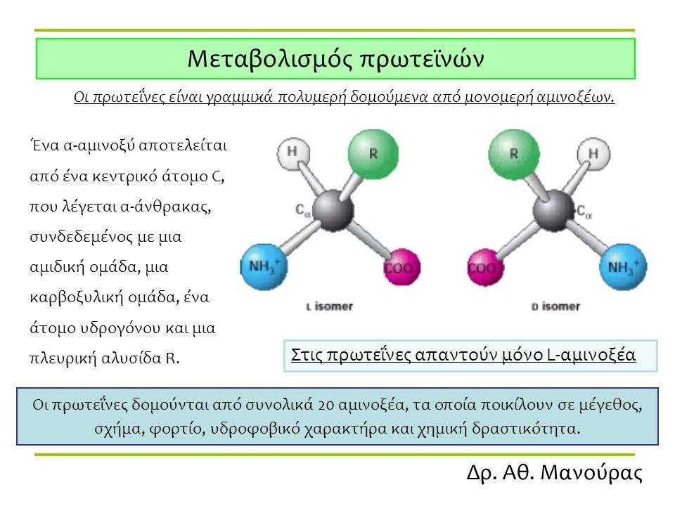 Δρ. Αθ. Μανούρας Μεταβολισμός πρωτεϊνών Οι πρωτεΐνες είναι γραμμικά πολυμερή δομούμενα από μονομερή αμινοξέων. Ένα α-αμινοξύ αποτελείται από ένα κεντρ