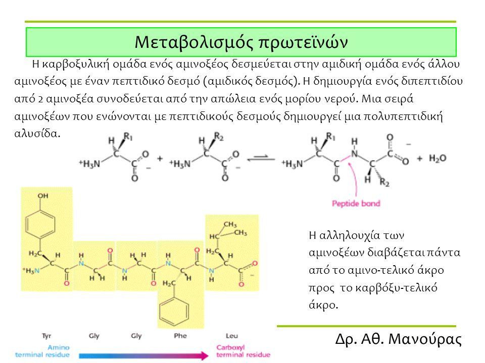 Δρ. Αθ. Μανούρας Μεταβολισμός πρωτεϊνών Η καρβοξυλική ομάδα ενός αμινοξέος δεσμεύεται στην αμιδική ομάδα ενός άλλου αμινοξέος με έναν πεπτιδικό δεσμό