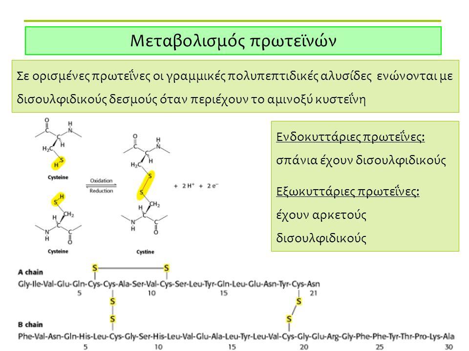 Δρ. Αθ. Μανούρας Μεταβολισμός πρωτεϊνών Σε ορισμένες πρωτεΐνες οι γραμμικές πολυπεπτιδικές αλυσίδες ενώνονται με δισουλφιδικούς δεσμούς όταν περιέχουν