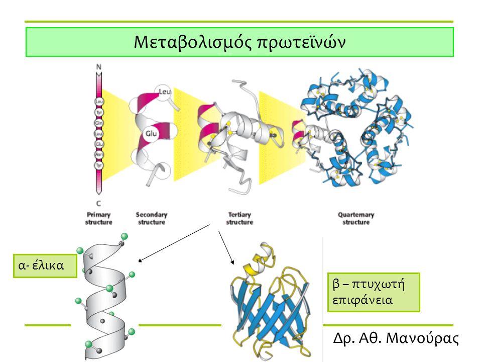 Δρ. Αθ. Μανούρας Μεταβολισμός πρωτεϊνών α- έλικα β – πτυχωτή επιφάνεια