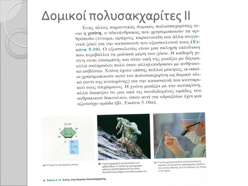Δομικοί πολυσακχαρίτες ΙΙ