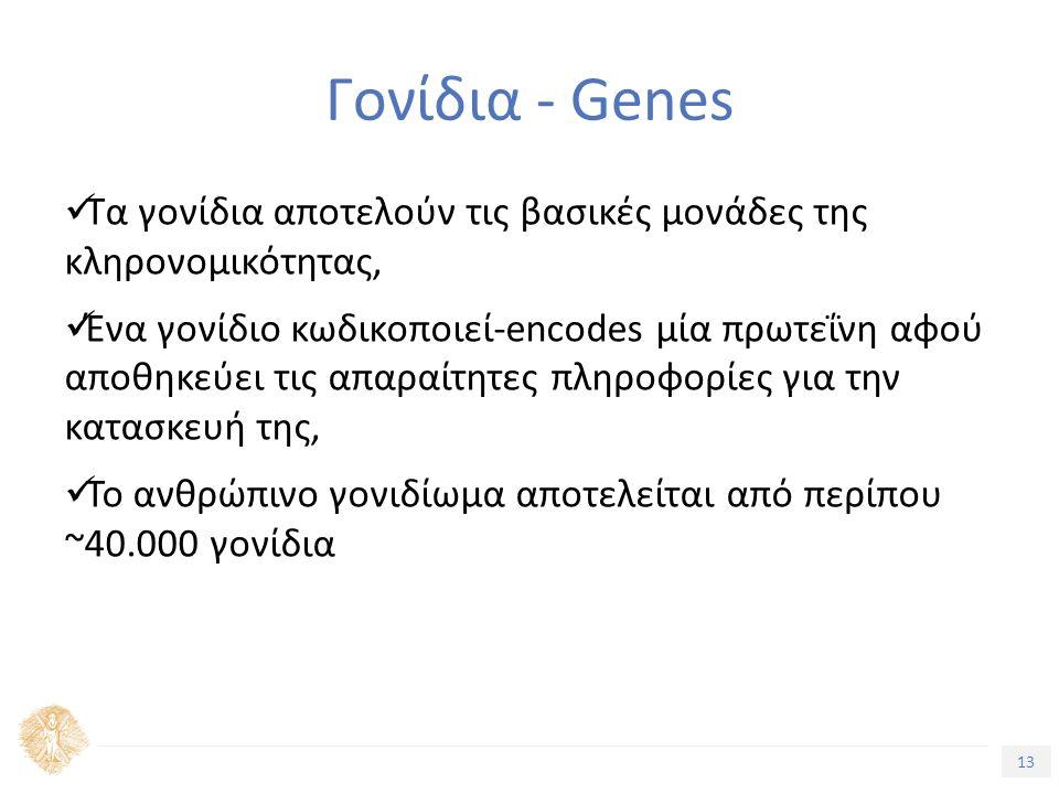 13 Τίτλος Ενότητας Γονίδια - Genes Τα γονίδια αποτελούν τις βασικές µονάδες της κληρονοµικότητας, Ένα γονίδιο κωδικοποιεί-encodes µία πρωτεΐνη αφού αποθηκεύει τις απαραίτητες πληροφορίες για την κατασκευή της, Το ανθρώπινο γονιδίωµα αποτελείται από περίπου ~40.000 γονίδια