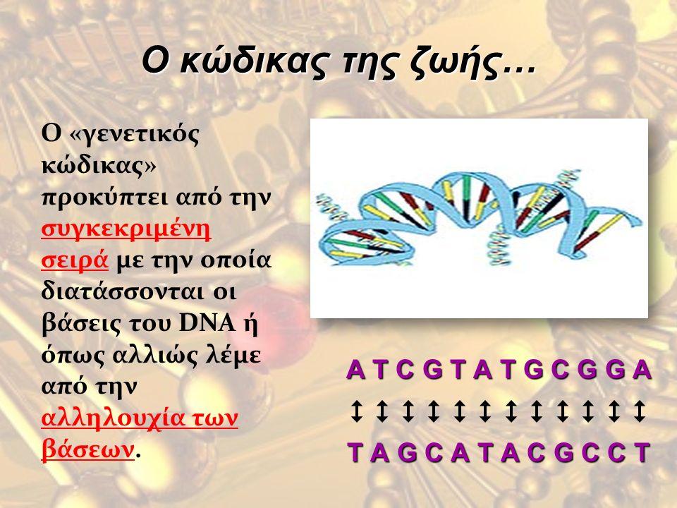 Ο κώδικας της ζωής… O «γενετικός κώδικας» προκύπτει από την συγκεκριμένη σειρά με την οποία διατάσσονται οι βάσεις του DNA ή όπως αλλιώς λέμε από την