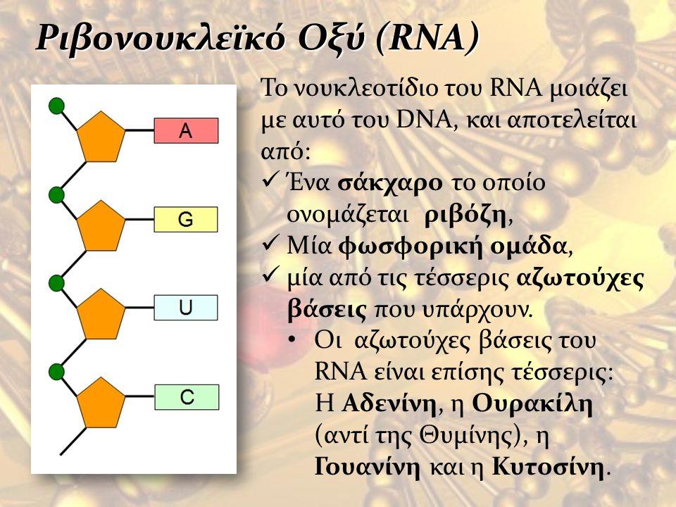 Το νουκλεοτίδιο του RNA μοιάζει με αυτό του DNA, και αποτελείται από: Ένα σάκχαρο το οποίο ονομάζεται ριβόζη, Μία φωσφορική ομάδα, μία από τις τέσσερι