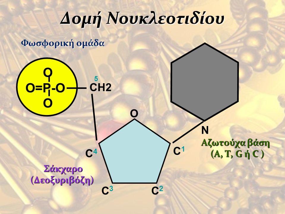 Δομή Νουκλεοτιδίου O O=P-O O Φωσφορική ομάδα N Αζωτούχα βάση (A, Τ, G ή C ) (A, Τ, G ή C ) CH2 O C1C1 C4C4 C3C3 C2C2 5 Σάκχαρο Σάκχαρο (Δεοξυριβόζη)
