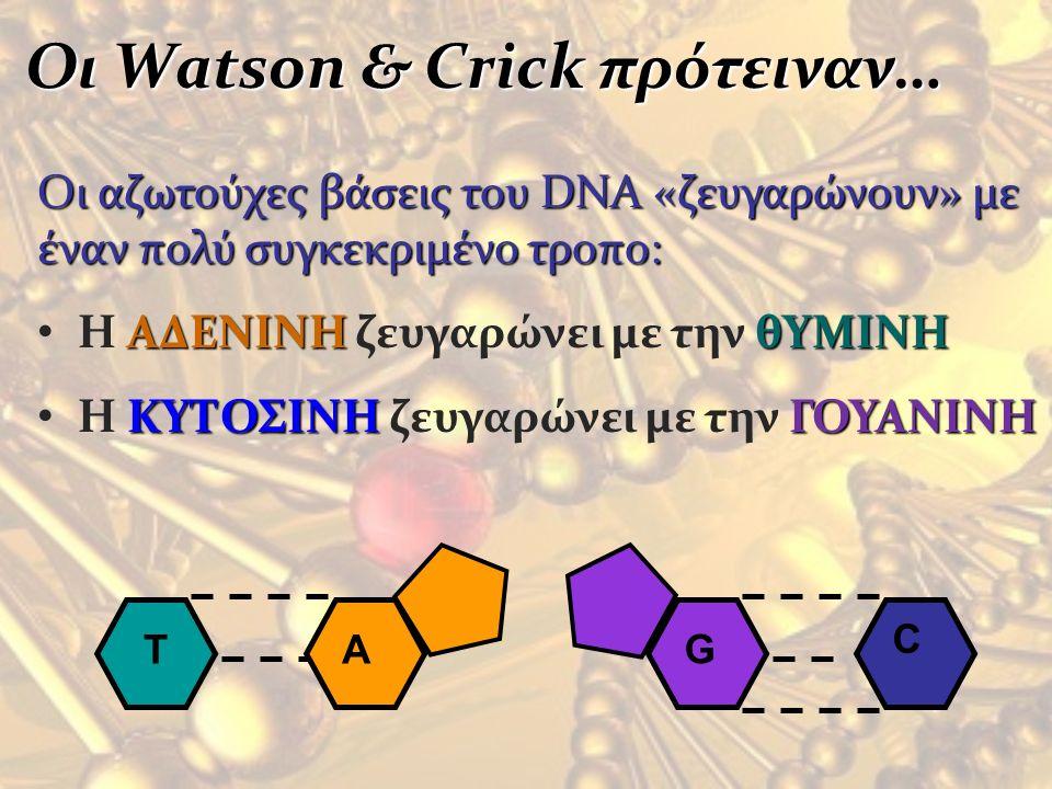 Οι Watson & Crick πρότειναν… Οι Watson & Crick πρότειναν…Οι αζωτούχες βάσεις του DNA «ζευγαρώνουν» με έναν πολύ συγκεκριμένο τροπο: H ΑΔΕΝΙΝΗ ζευγαρών
