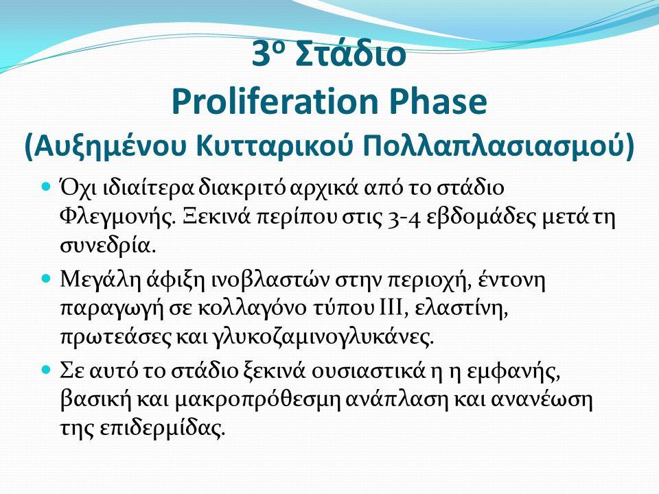 3 ο Στάδιο Proliferation Phase (Αυξημένου Κυτταρικού Πολλαπλασιασμού) Όχι ιδιαίτερα διακριτό αρχικά από το στάδιο Φλεγμονής.