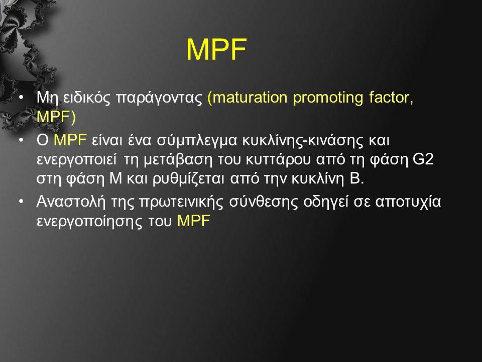 MPF Μη ειδικός παράγοντας (maturation promoting factor, MPF) Ο MPF είναι ένα σύμπλεγμα κυκλίνης-κινάσης και ενεργοποιεί τη μετάβαση του κυττάρου από τη φάση G2 στη φάση Μ και ρυθμίζεται από την κυκλίνη Β.