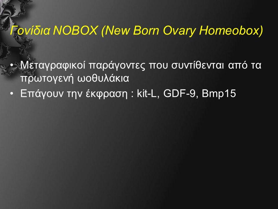 Γονίδια NOBOX (New Born Ovary Homeobox) Μεταγραφικοί παράγοντες που συντίθενται από τα πρωτογενή ωοθυλάκια Επάγουν την έκφραση : kit-L, GDF-9, Bmp15