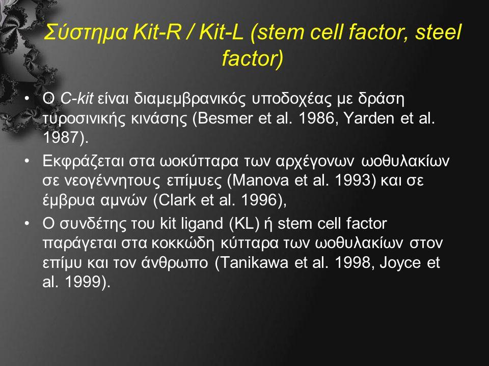 Σύστημα Kit-R / Kit-L (stem cell factor, steel factor) Ο C-kit είναι διαμεμβρανικός υποδοχέας με δράση τυροσινικής κινάσης (Besmer et al.