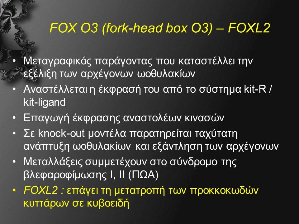 FOX O3 (fork-head box O3) – FOXL2 Μεταγραφικός παράγοντας που καταστέλλει την εξέλιξη των αρχέγονων ωοθυλακίων Αναστέλλεται η έκφρασή του από το σύστημα kit-R / kit-ligand Επαγωγή έκφρασης αναστολέων κινασών Σε knock-out μοντέλα παρατηρείται ταχύτατη ανάπτυξη ωοθυλακίων και εξάντληση των αρχέγονων Μεταλλάξεις συμμετέχουν στο σύνδρομο της βλεφαροφίμωσης Ι, ΙΙ (ΠΩΑ) FOXL2 : επάγει τη μετατροπή των προκκοκωδών κυττάρων σε κυβοειδή