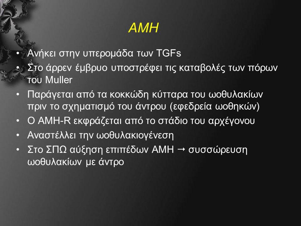ΑΜΗ Ανήκει στην υπερομάδα των TGFs Στο άρρεν έμβρυο υποστρέφει τις καταβολές των πόρων του Muller Παράγεται από τα κοκκώδη κύτταρα του ωοθυλακίων πριν το σχηματισμό του άντρου (εφεδρεία ωοθηκών) Ο ΑΜΗ-R εκφράζεται από το στάδιο του αρχέγονου Αναστέλλει την ωοθυλακιογένεση Στο ΣΠΩ αύξηση επιπέδων ΑΜΗ  συσσώρευση ωοθυλακίων με άντρο