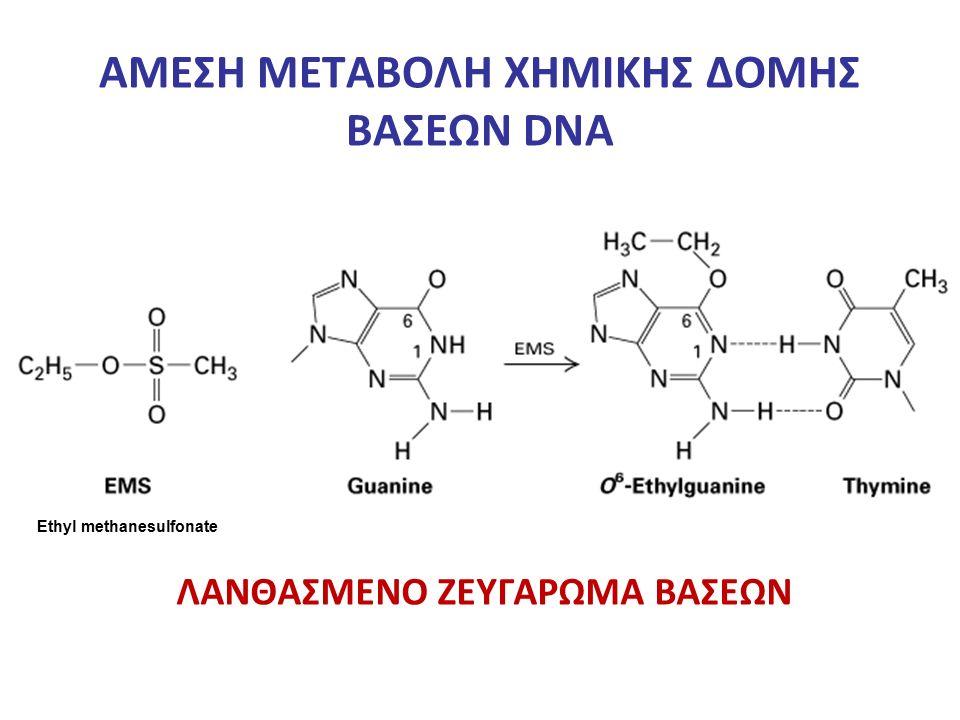 ΑΜΕΣΗ ΜΕΤΑΒΟΛΗ ΧΗΜΙΚΗΣ ΔΟΜΗΣ ΒΑΣΕΩΝ DNA ΛΑΝΘΑΣΜΕΝΟ ΖΕΥΓΑΡΩΜΑ ΒΑΣΕΩΝ Ethyl methanesulfonate