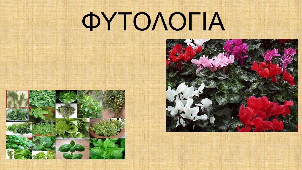 Τι είναι η χλωρίδα  Το σύνολο των φυτών μιας χώρας αποτελεί την χλωρίδα της  Η ελληνική χλωρίδα παρουσιάζει μεγάλη ποικιλία από διαφορετικά είδη φυτών