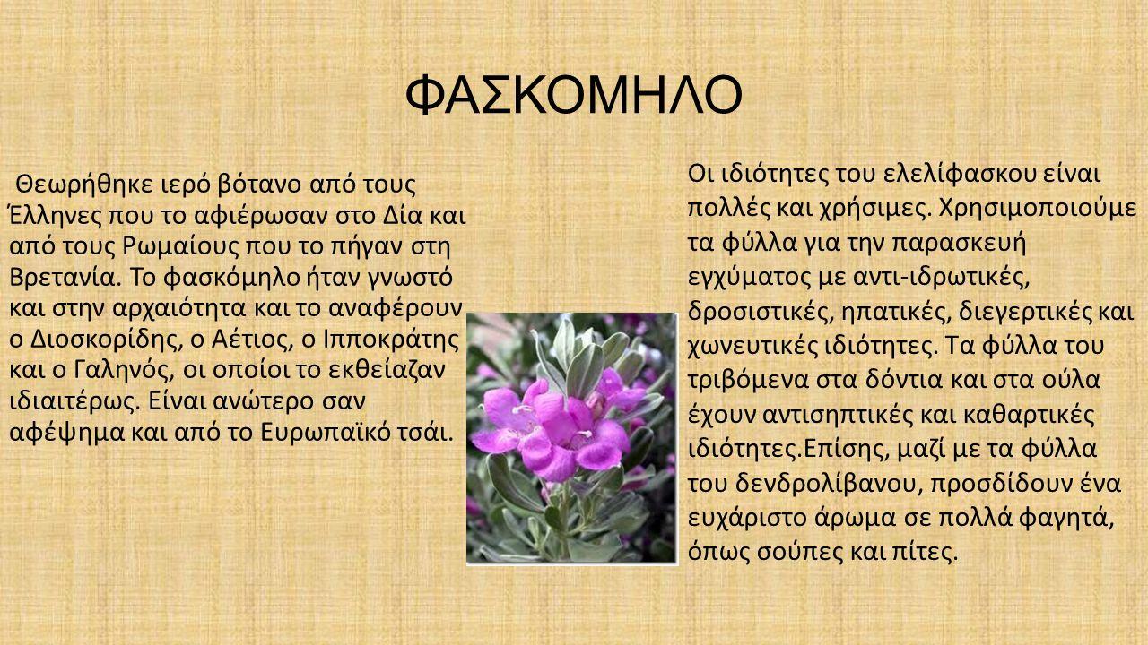 ΦΑΣΚΟΜΗΛΟ Θεωρήθηκε ιερό βότανο από τους Έλληνες που το αφιέρωσαν στο Δία και από τους Ρωμαίους που το πήγαν στη Βρετανία.