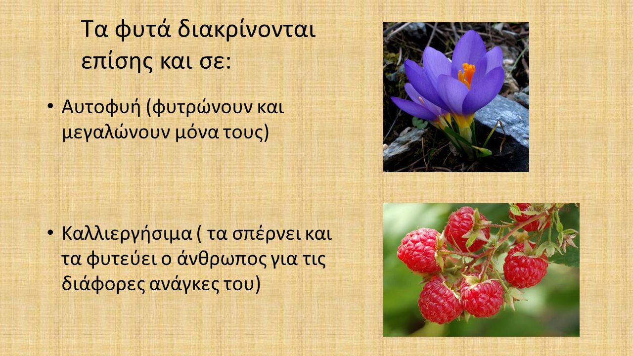 Τα φυτά διακρίνονται επίσης και σε: Αυτοφυή (φυτρώνουν και μεγαλώνουν μόνα τους) Καλλιεργήσιμα ( τα σπέρνει και τα φυτεύει ο άνθρωπος για τις διάφορες ανάγκες του)