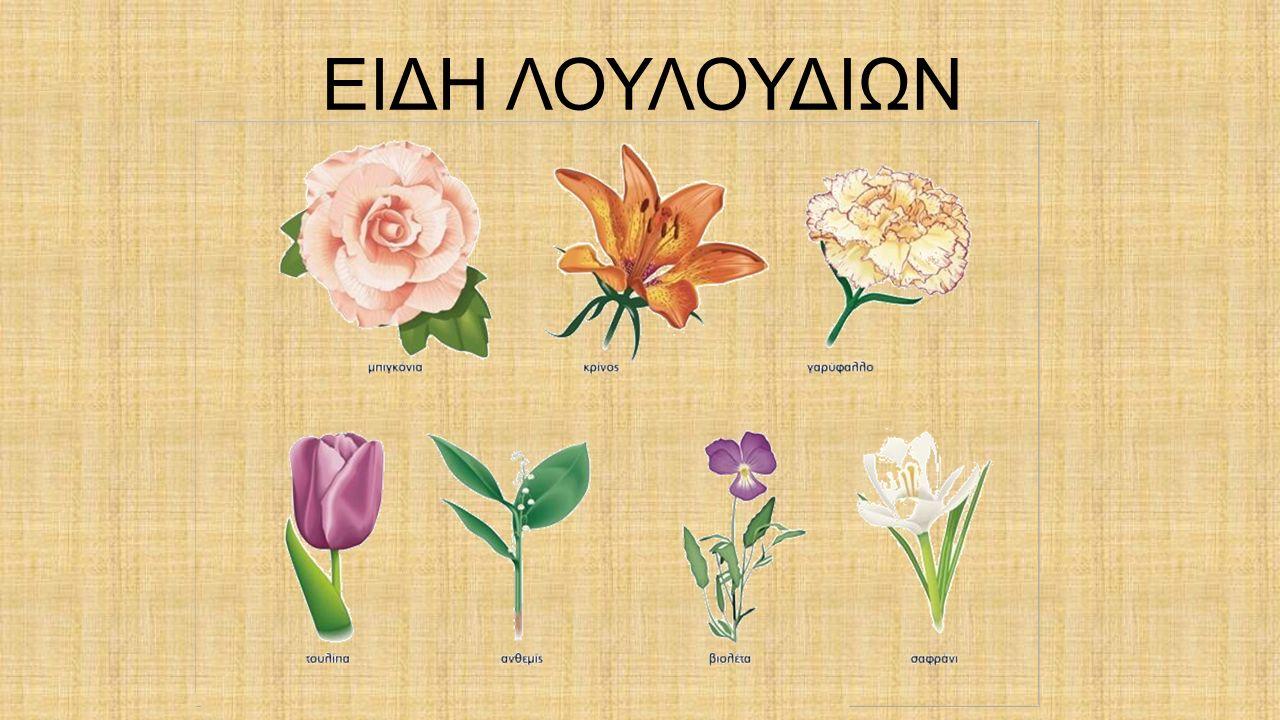 ΜΕΝΤΑ Υπάρχουν 30 διαφορετικά είδη μέντας.Είναι πολυετές φυτό της οικογενείας των χειλανθών.