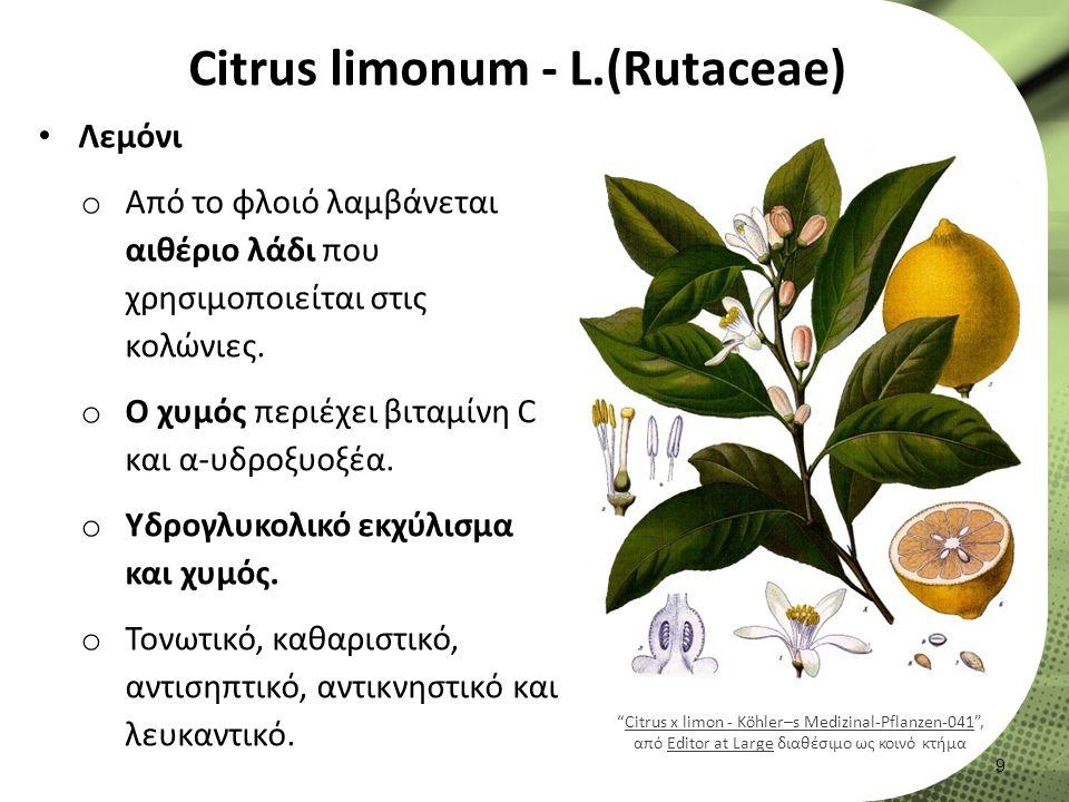 Citrus limonum - L.(Rutaceae) Λεμόνι o Από το φλοιό λαμβάνεται αιθέριο λάδι που χρησιμοποιείται στις κολώνιες.