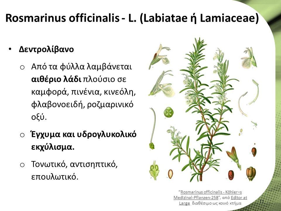 Rosmarinus officinalis - L.