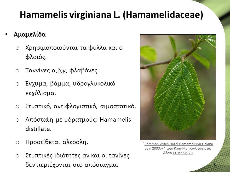 Hamamelis virginiana L. (Hamamelidaceae) Αμαμελίδα o Χρησιμοποιούνται τα φύλλα και ο φλοιός.