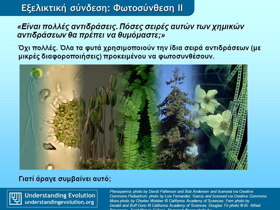Εξελικτική σύνδεση: Φωτοσύνθεση II … λόγω κοινού προγόνου Αφετηρία εξέλιξης της φωτοσύνθεσης Αρχαία ΕυκαρυώτεςΕυβακτήρια