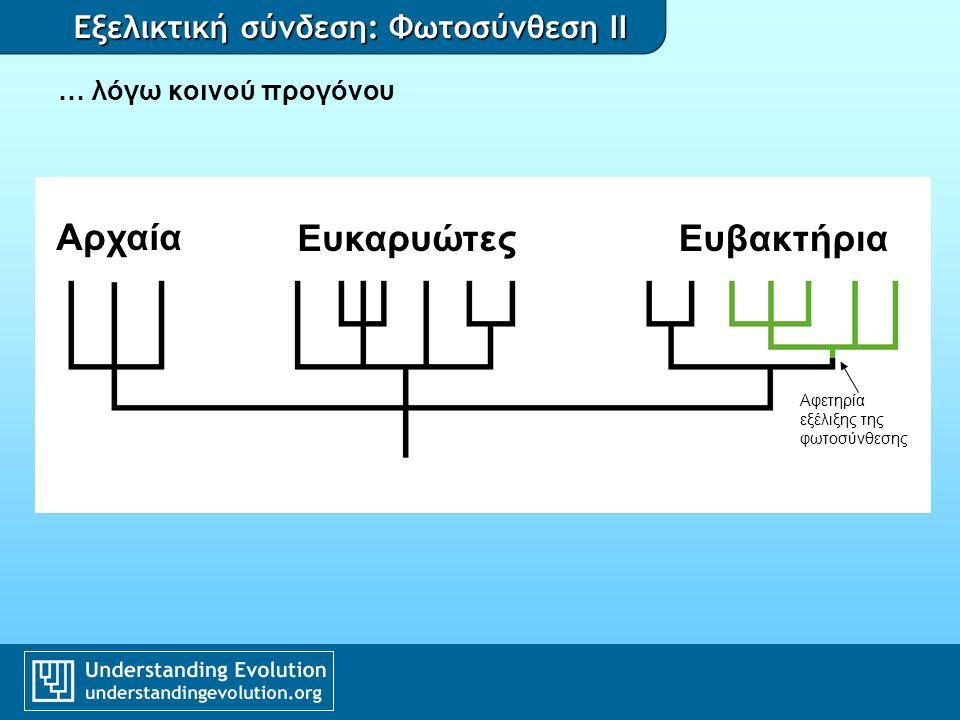 Εξελικτική σύνδεση: Φωτοσύνθεση II … και ενδοσυμβίωσης Αφετηρία εξέλιξης της φωτοσύνθεσης Αρχαία Ευκαρυώτες Ευβακτήρια