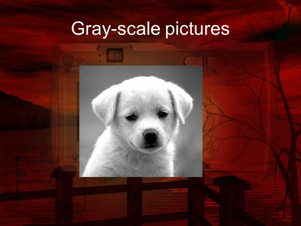 Gray-scale pictures